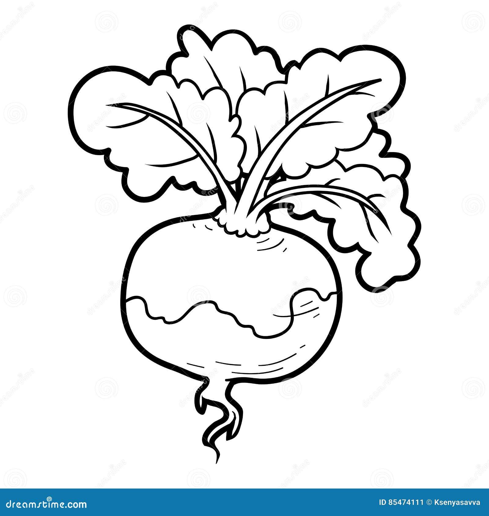 Libro De Colorear Verduras Nabo Ilustración Del Vector