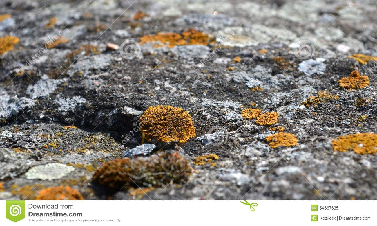 lichen growing on a rock stock photo image 54667635. Black Bedroom Furniture Sets. Home Design Ideas