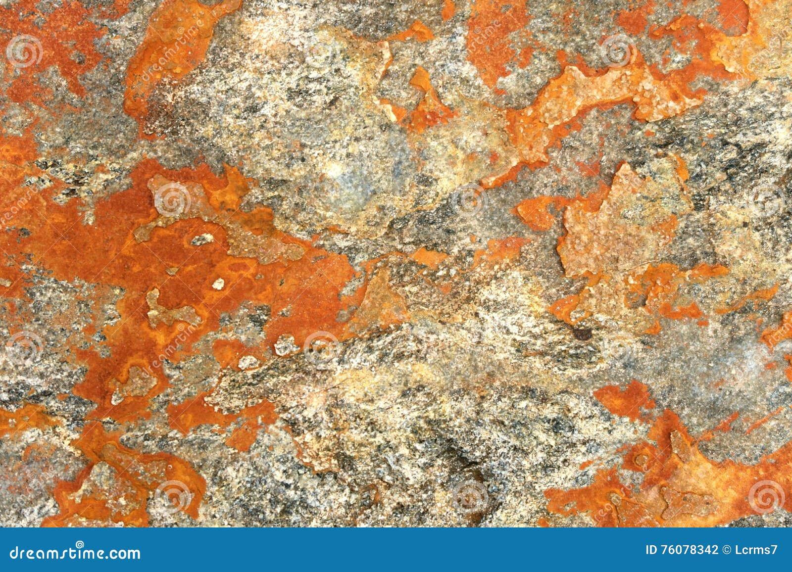 Lichen orange sur la roche alpes européennes plein backgro naturel de cadre