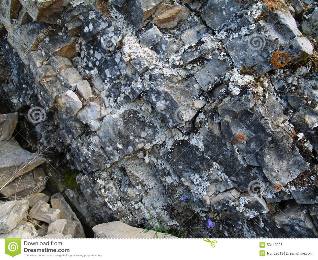 Lichens and mosses on stones (Lena Pillars, Yakutia)