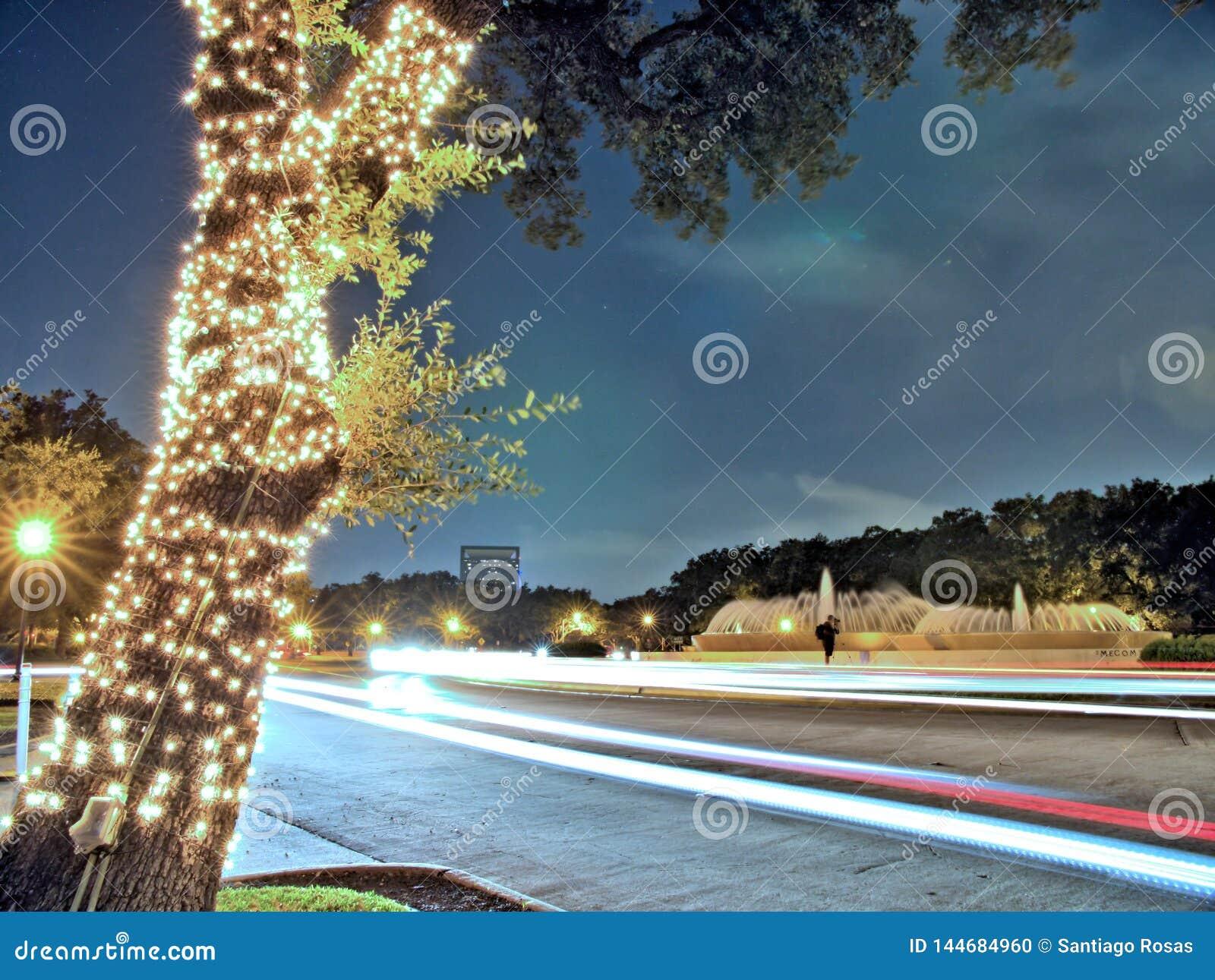 Licht op boom