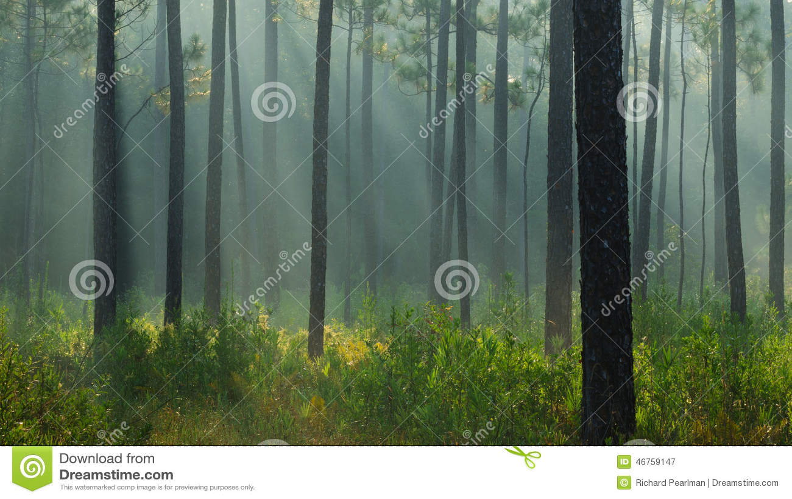 Lichte stralen in het bos