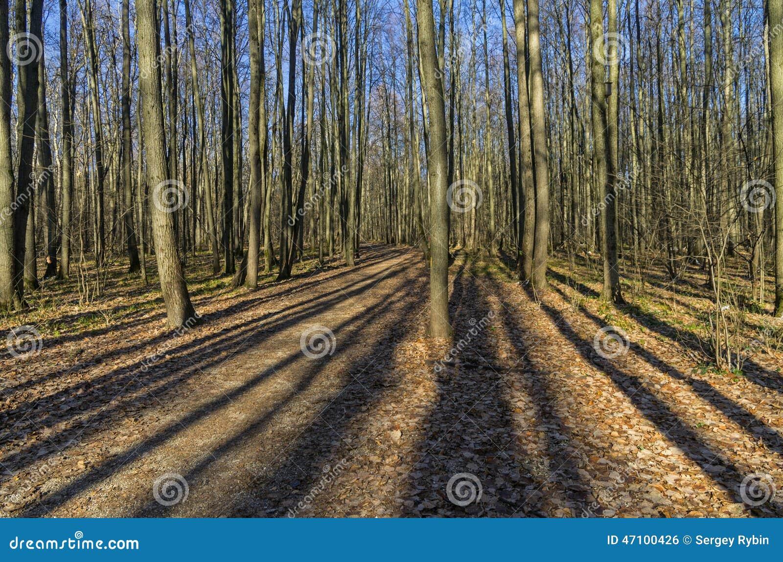 Lichter und Schatten im Herbstwald