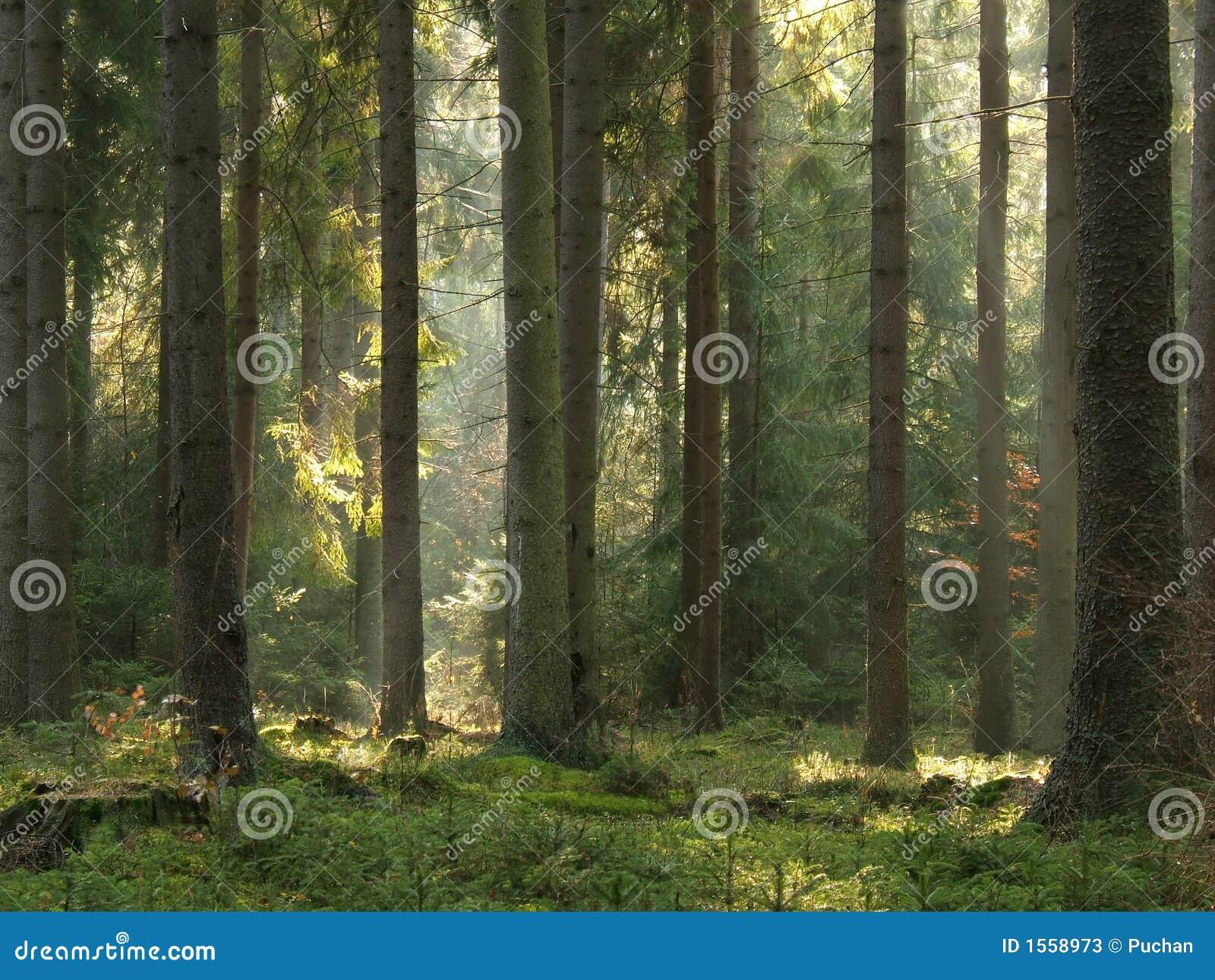 Lichtstralen in bos