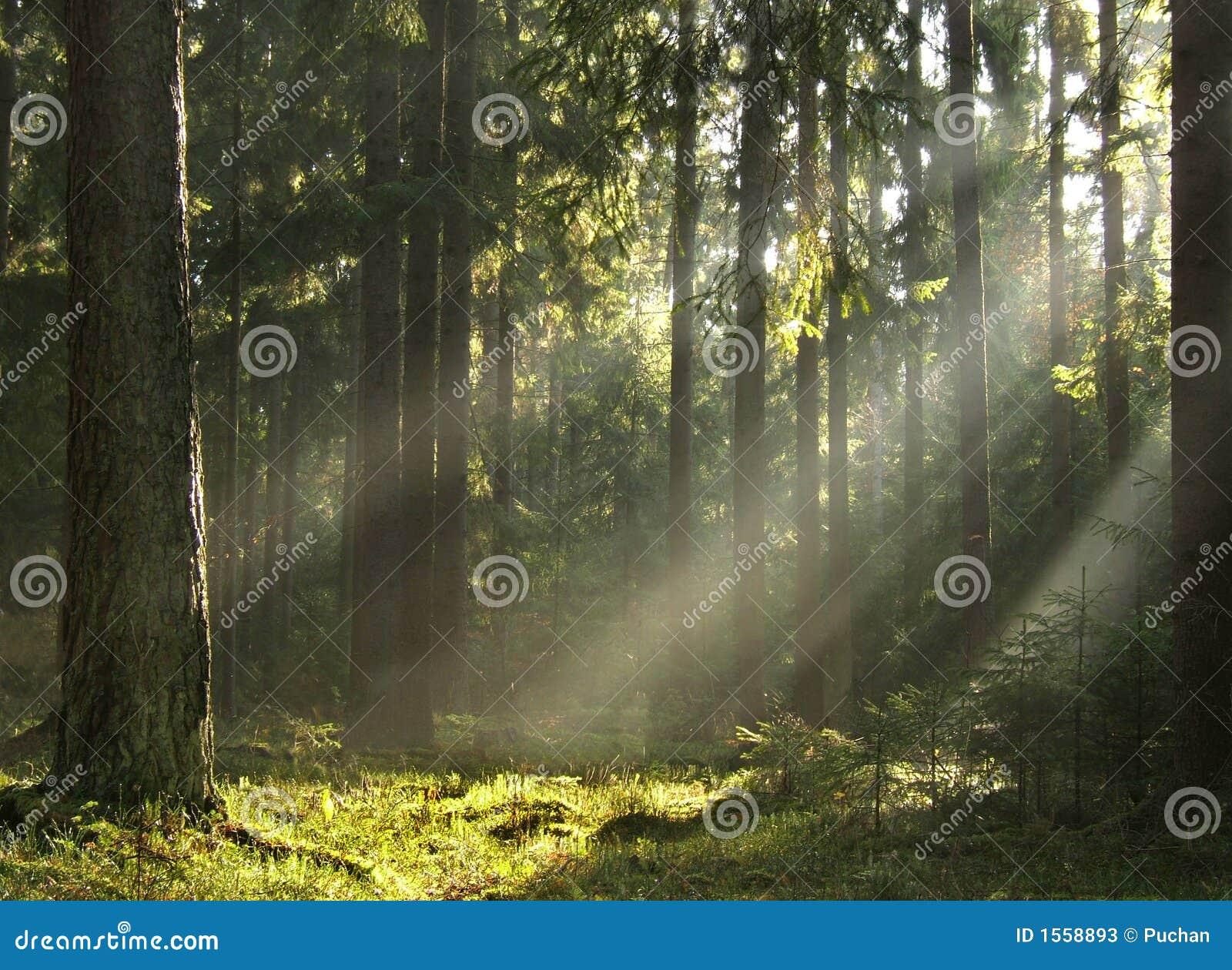 Lichtstralen ib bos