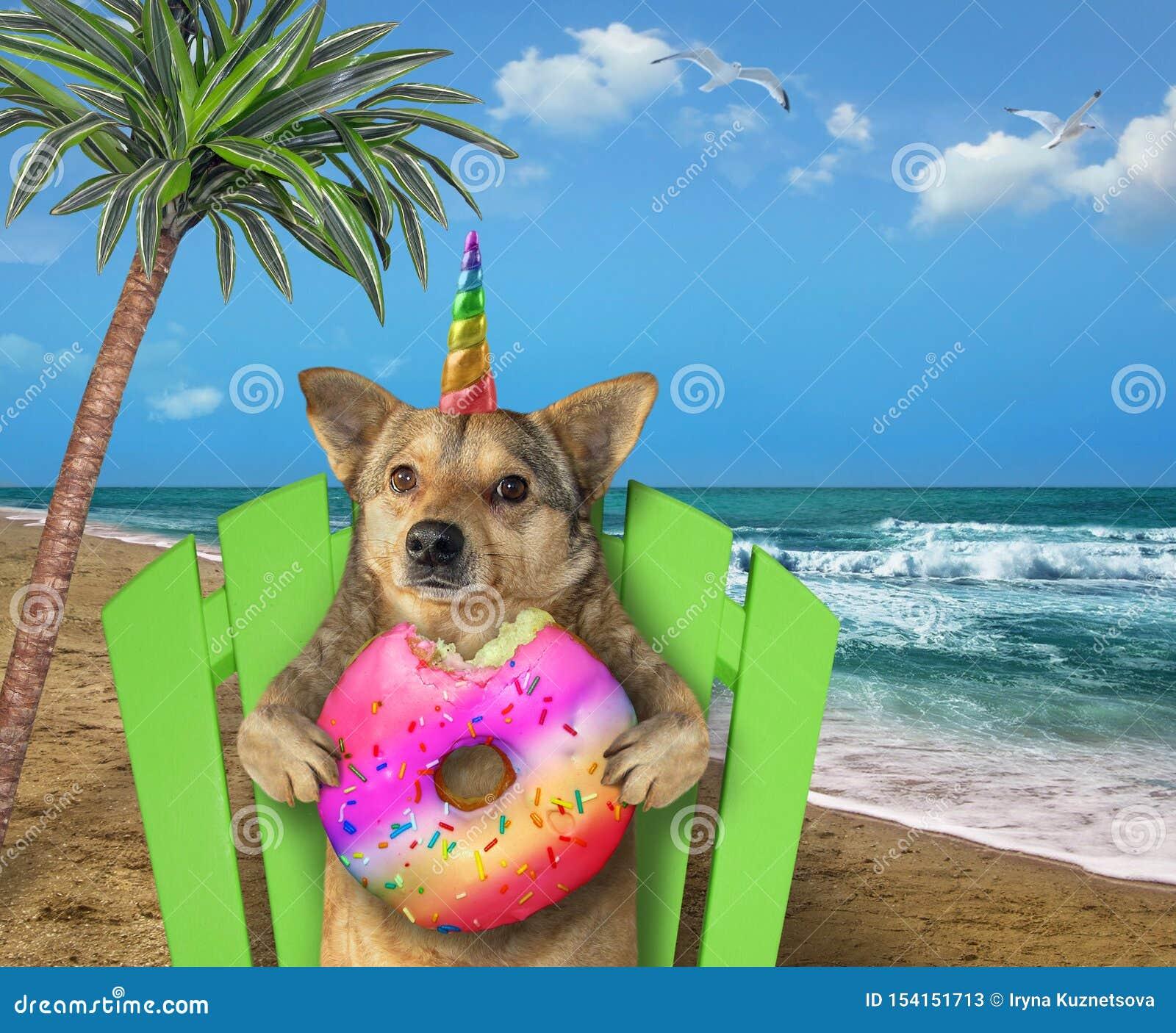 Licorne de chien se reposant sur la plage