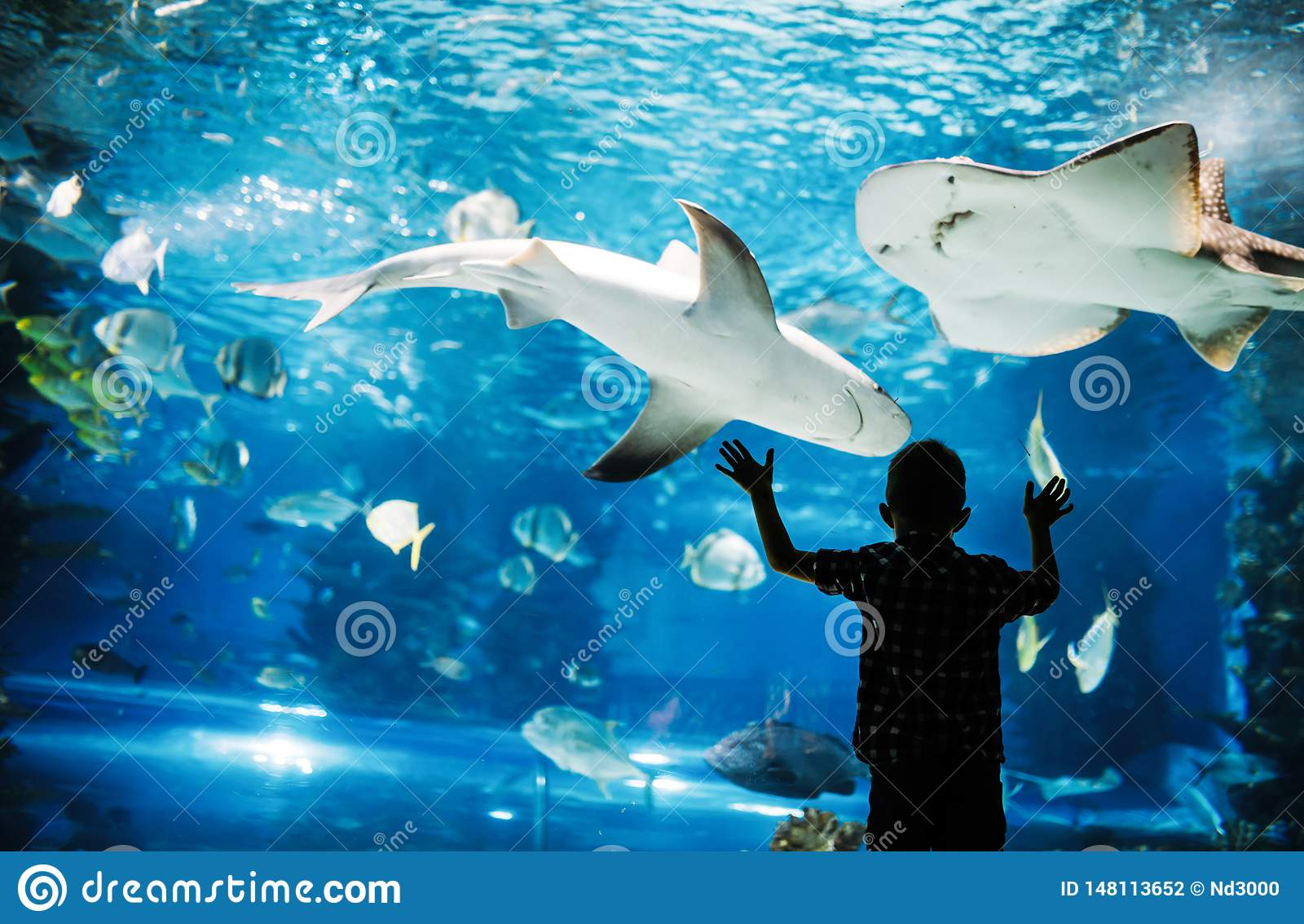 ?liczna ch?opiec ogl?da ryba w akwarium