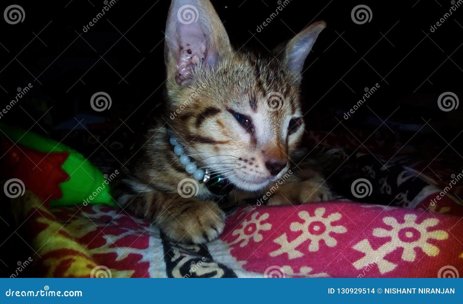 śliczna Kot Tapeta Zdjęcie Stock Obraz Złożonej Z Wally 130929514