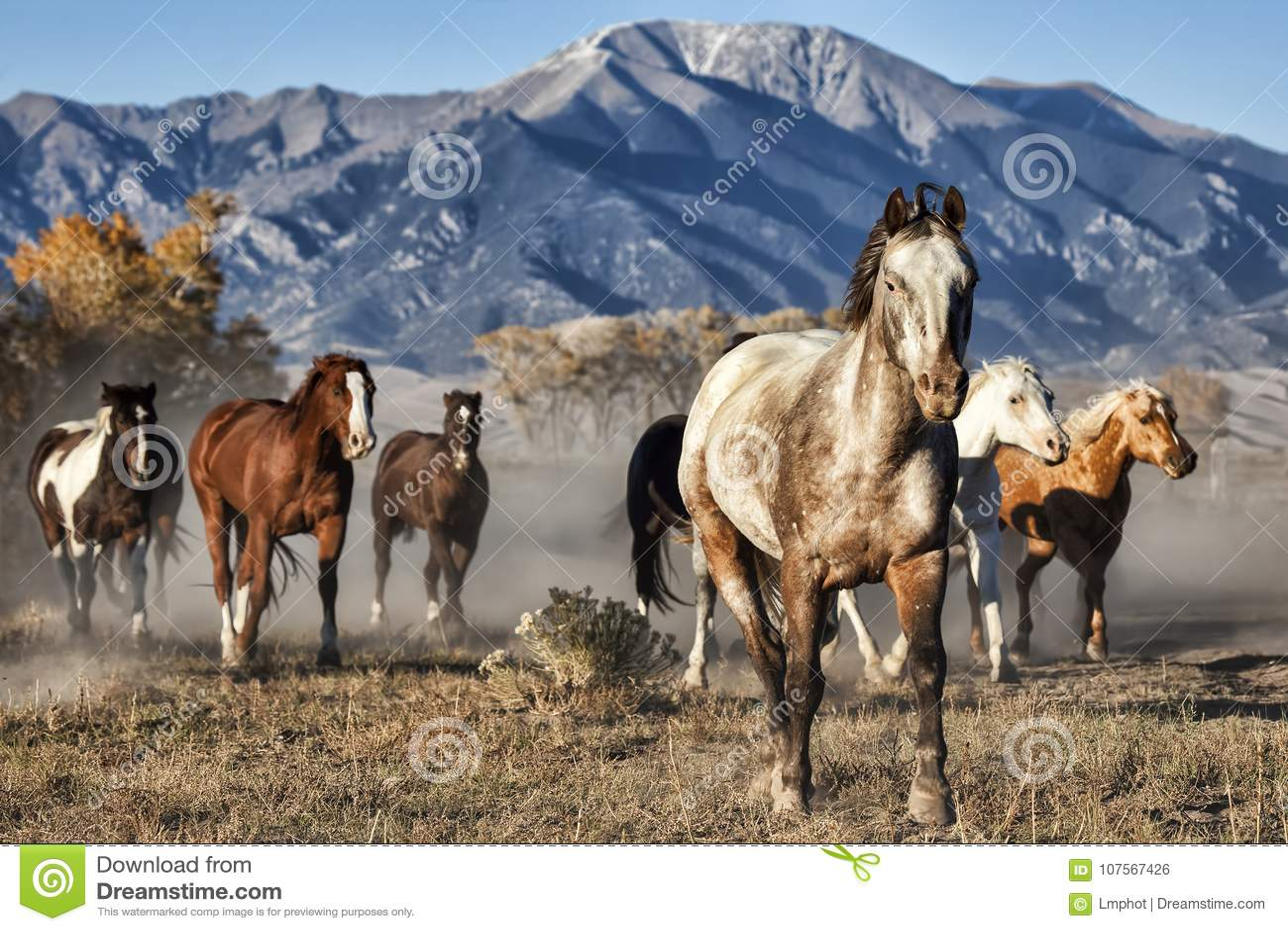 Lider Działający konie z Halnym tłem