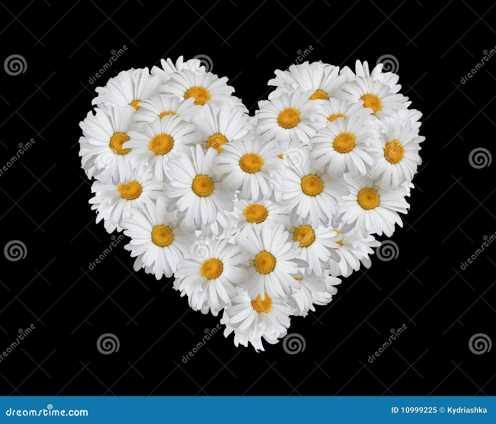 Liebe, Inneres der Gänseblümchen