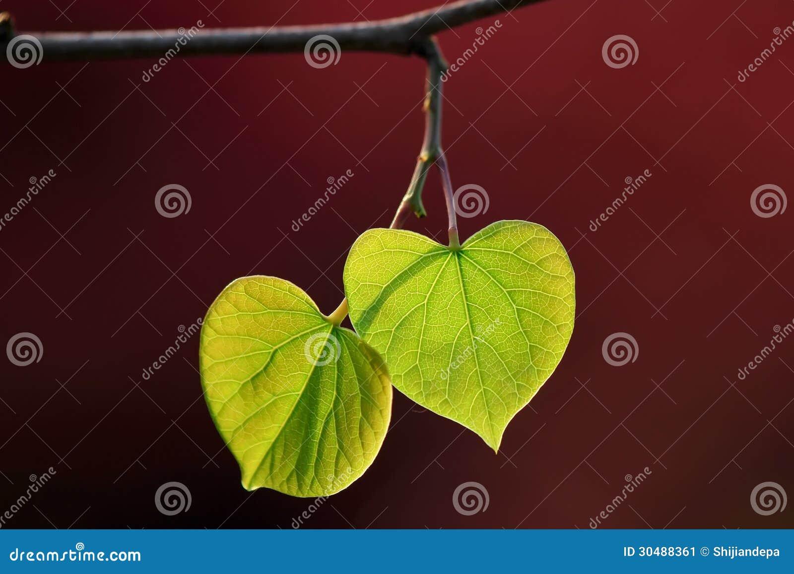 Lieben Sie die grünen Blätter