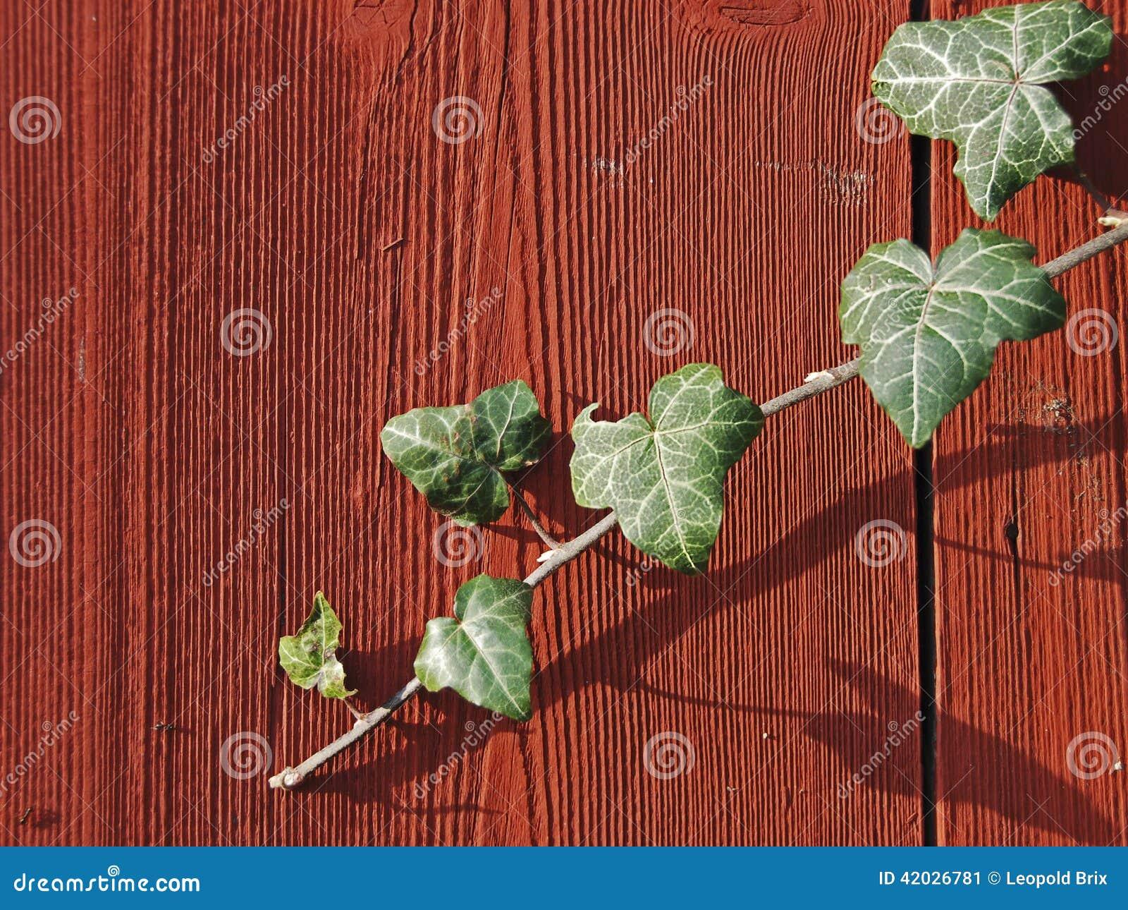 Lierre au mur en bois rouge de falun photo stock image - Rouge de falun ...