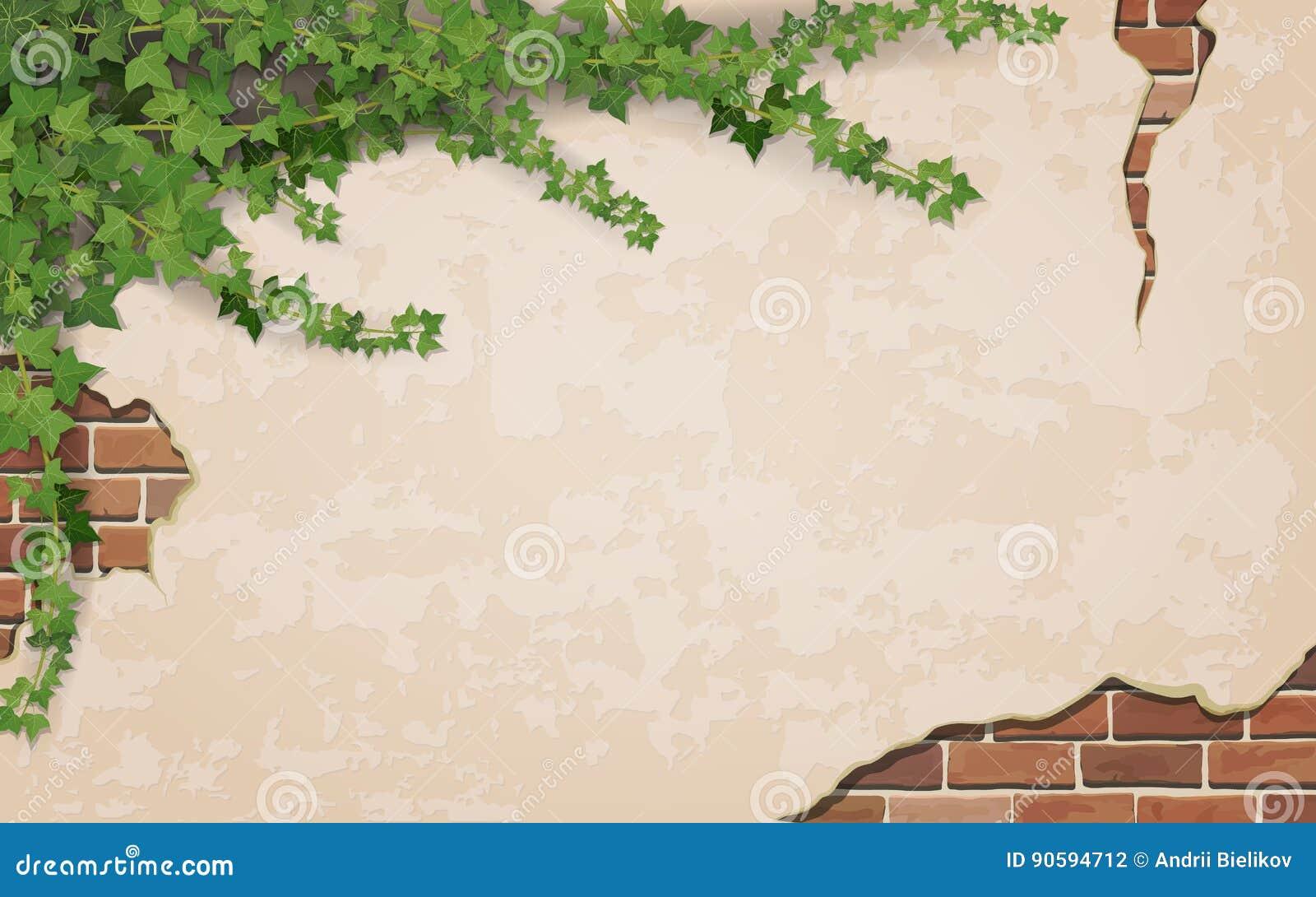 Lierre sur le fond superficiel par les agents de mur