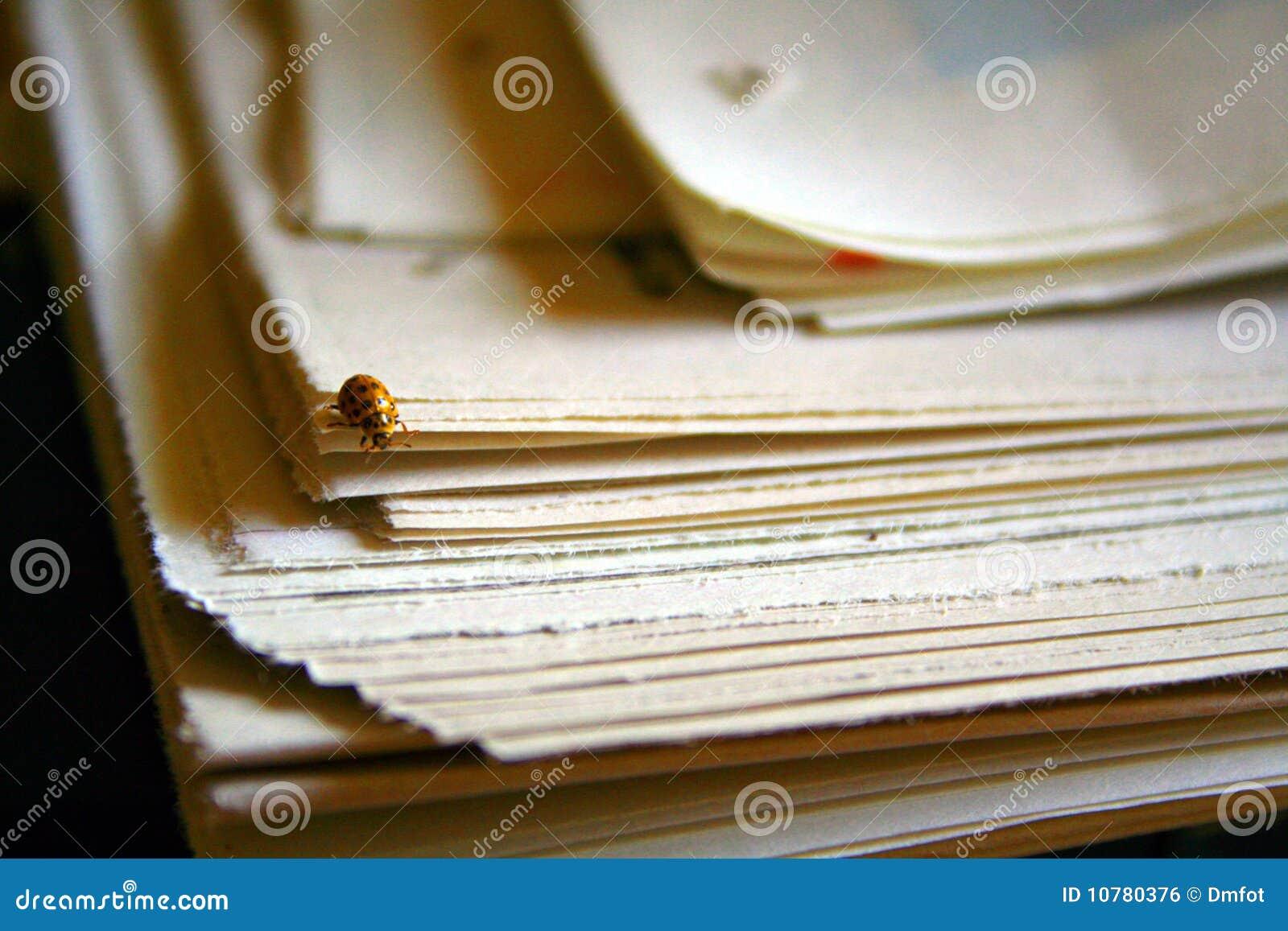 Lieveheersbeestje op krant