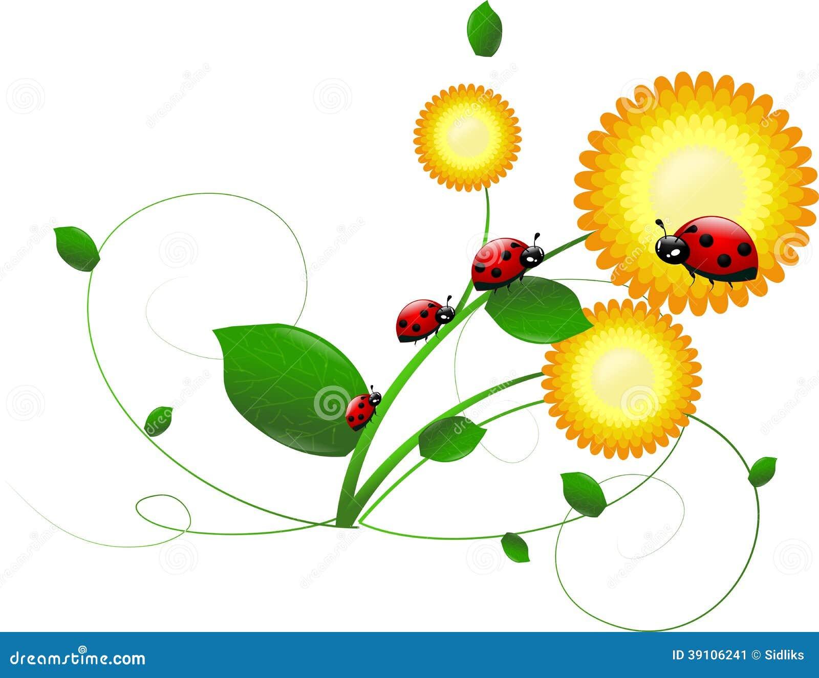 Lieveheersbeestjes op bloem