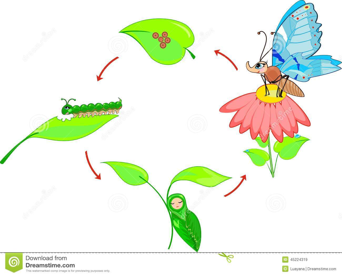 Life Cycle Of Butterfly Stock Vector - Image: 45224319