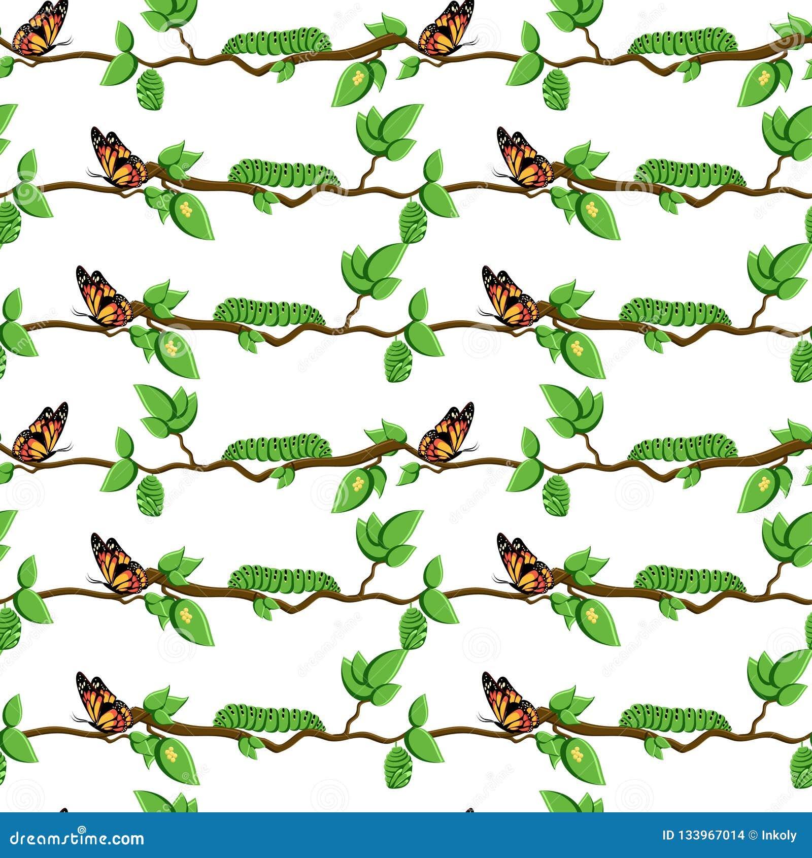 Life cycle of butterfly, metamorphosis seamless pattern