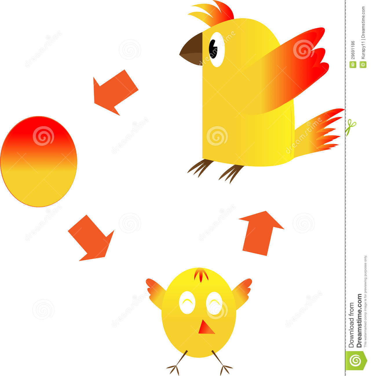 worksheet. Life Cycle Of A Chicken Worksheet. Worksheet Fun ...