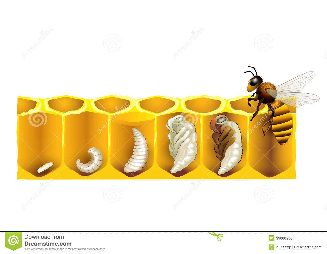 Tire Tracks Clipart besides Types Of Muscles 17796266 further Royalty Free Stock Photography Cute Furry Monster Image26872807 together with The Basic Principles Of Biology in addition Royalty Free Stock Photography Human Cell Diagrammatical Image2949267. on animal cell graphics