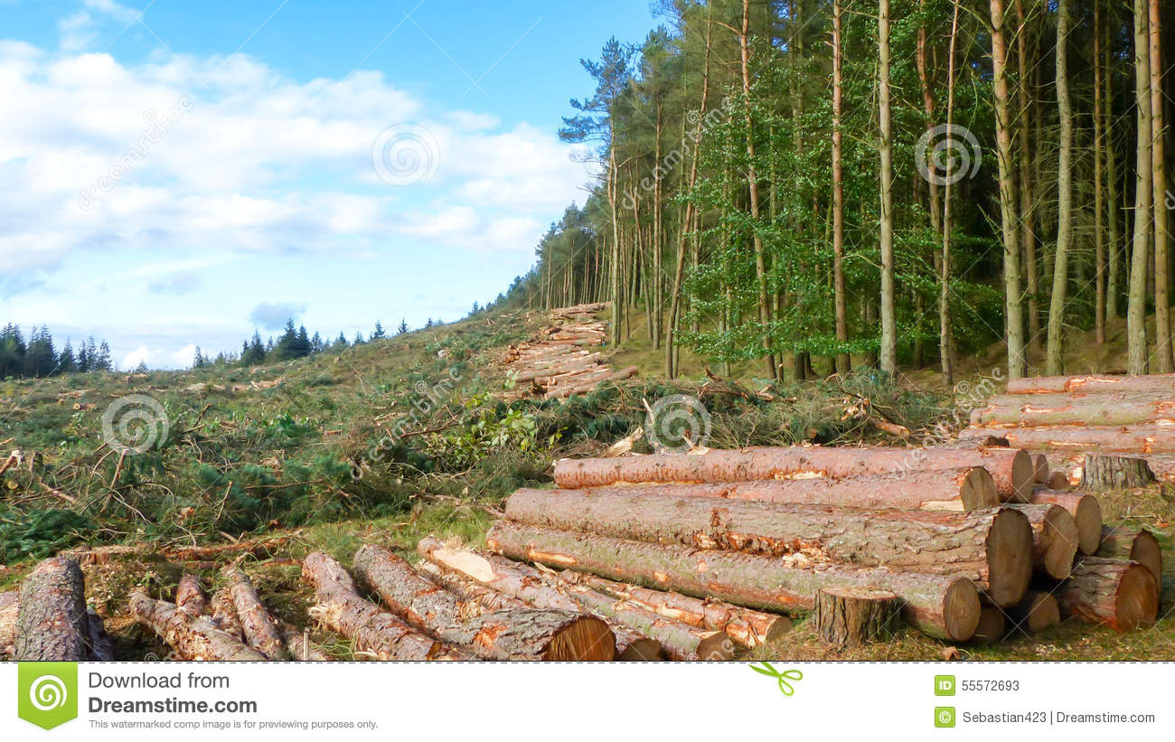 Life and Death contrast - Cut down trees next to living forest