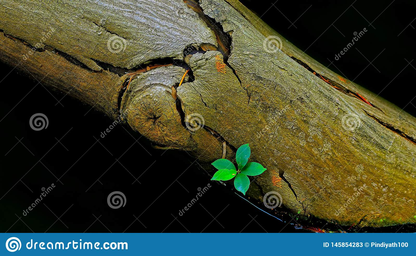 Life after death : sprout on a dead tree trunk submerged in dirty water