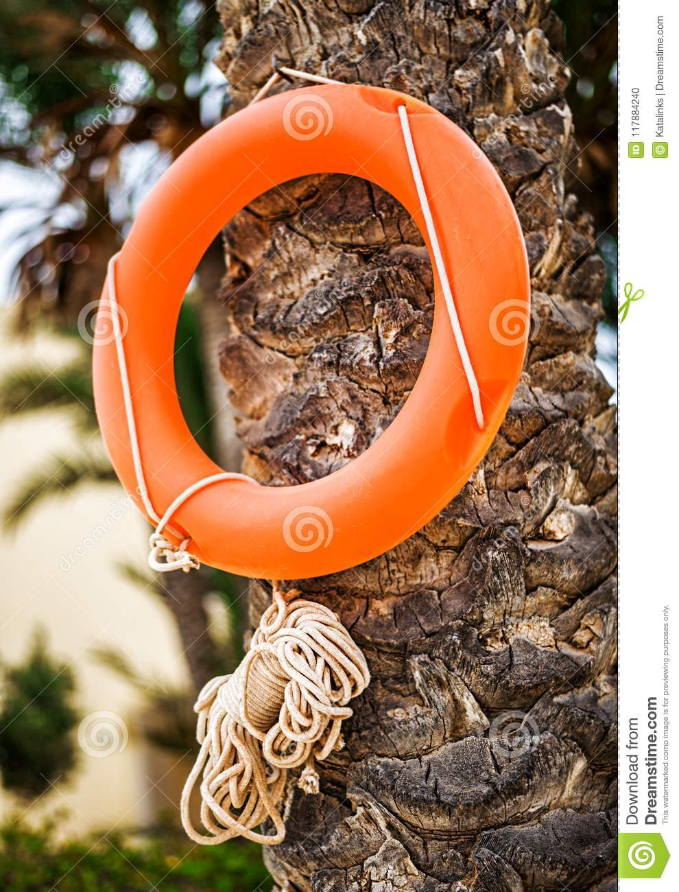 Lifebuoy Life Ring With Rope Hanging On Palm Tree Stock Photo ...