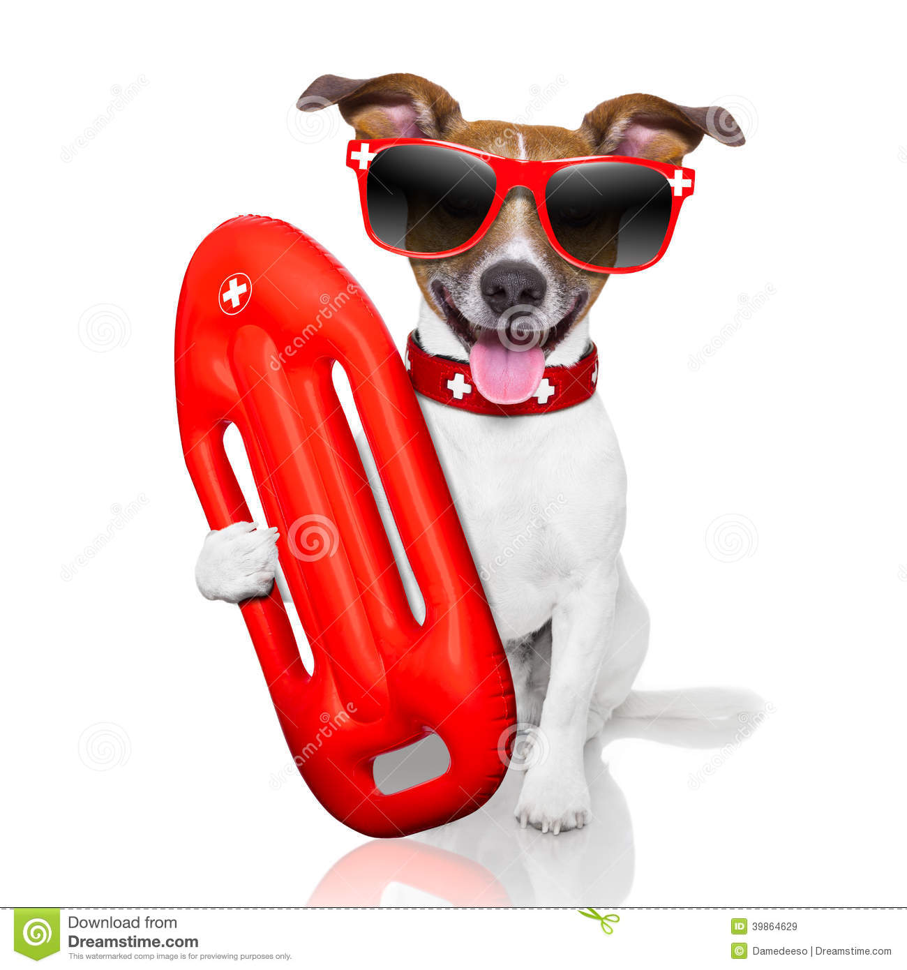 Download Lifeguard dog stock image. Image of isolated, ring, lifeguards - 39864629