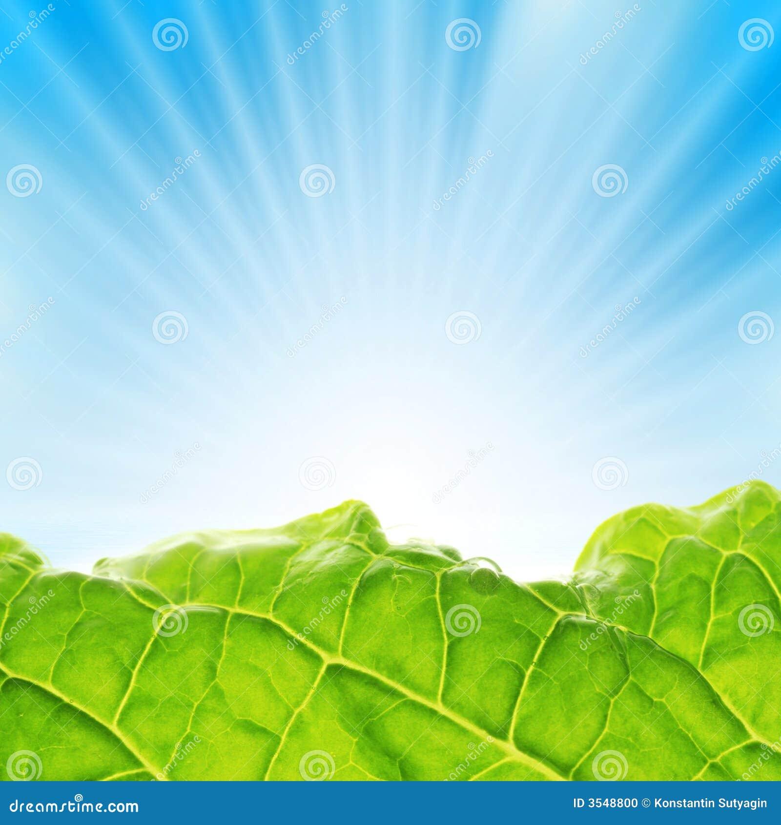 Liggandeleafen rays sunen