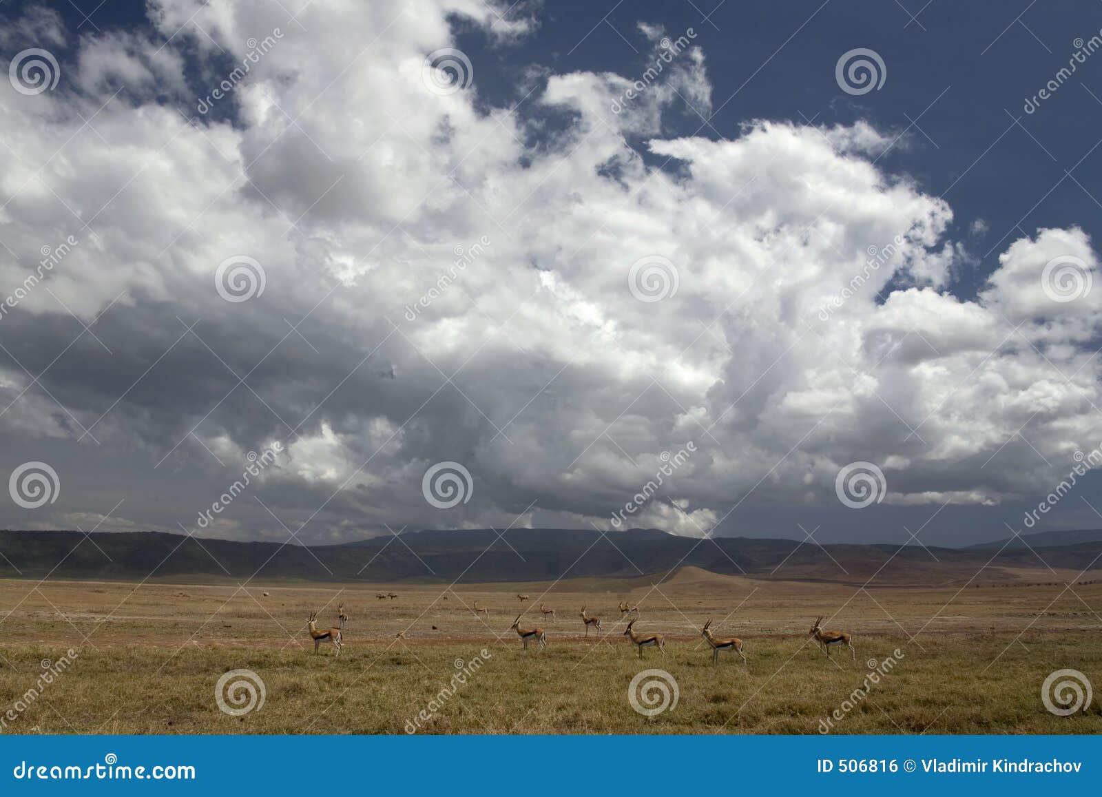 Liggandengorongoro för 036 africa