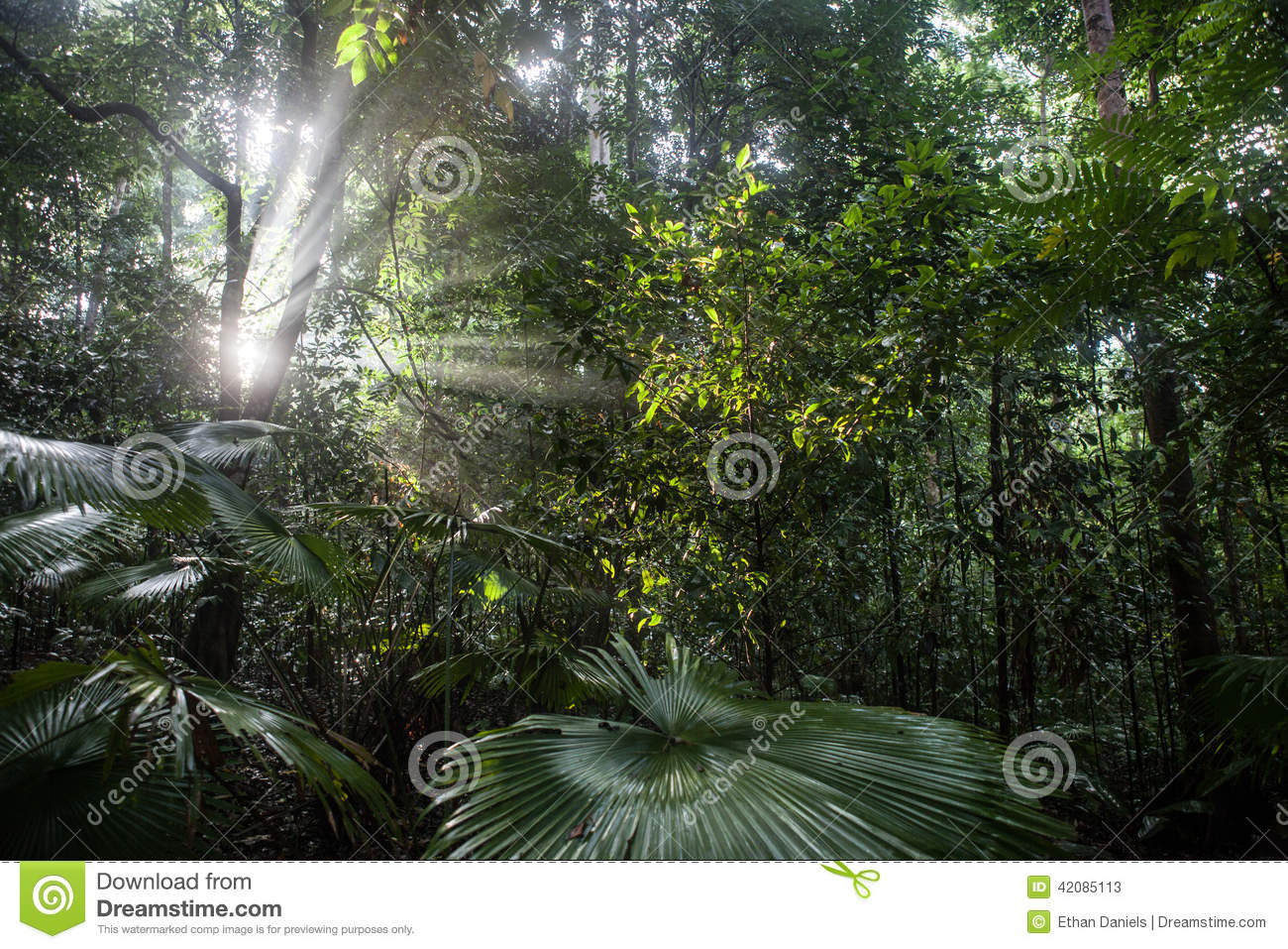 Rainforest light penetration percentage