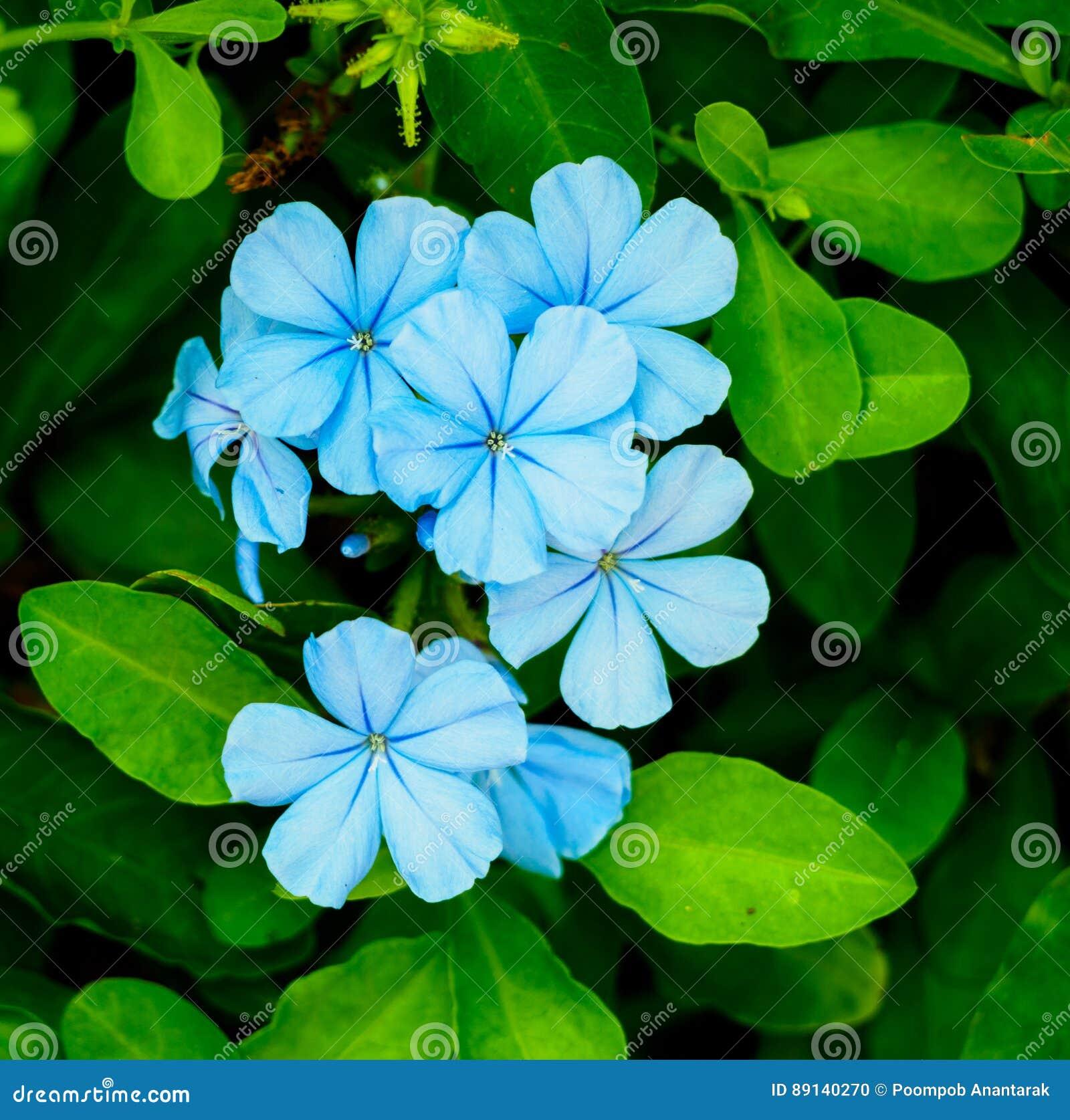 Light blue flower stock photo image of light flora 89140270 light blue flower izmirmasajfo