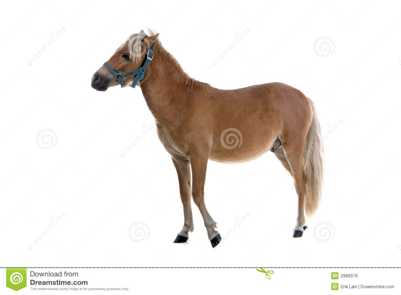 Light brown horse stock photo. Image of horse, pretty ...