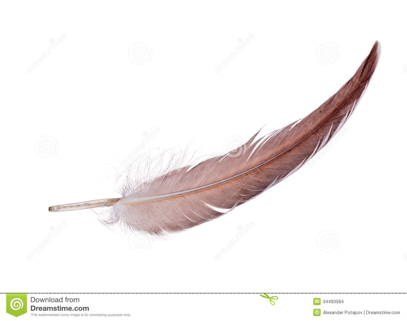 Light Brown Single Isolated Feather Stock Images Image