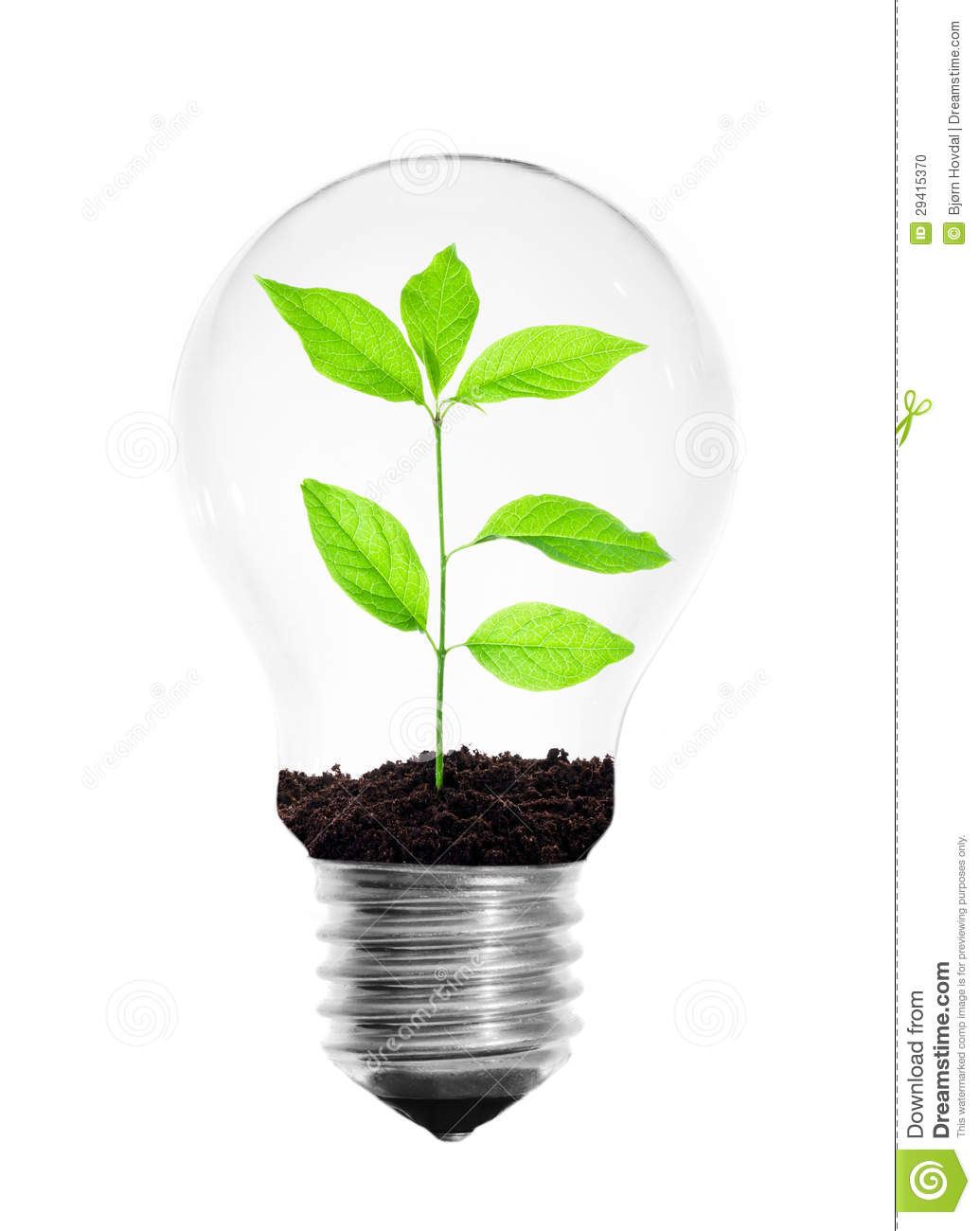 Light bulb with a growing plant inside isolated on a white background.