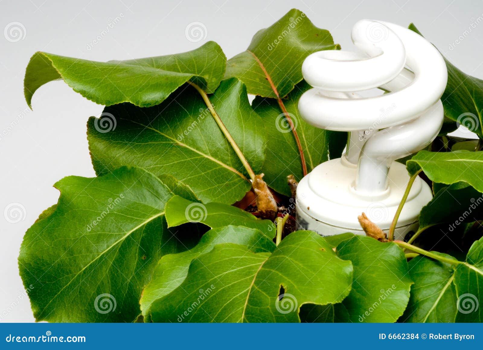 light bulb in plant stock images image 6662384. Black Bedroom Furniture Sets. Home Design Ideas