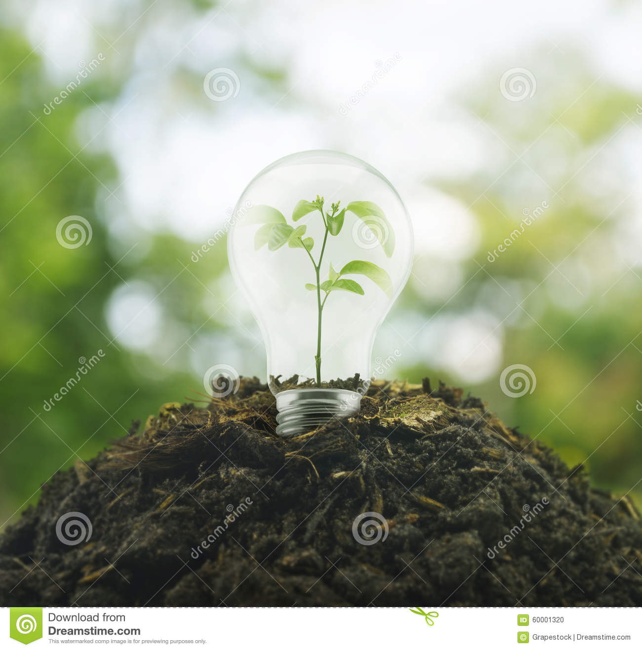 Light bulb with small plant growing inside royalty free for Soil and green