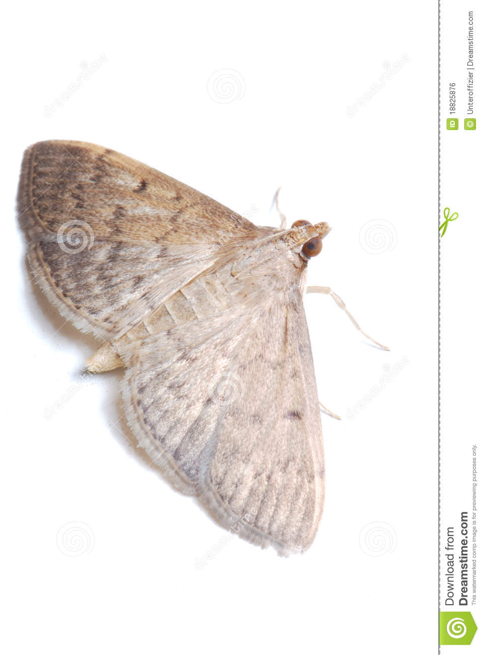 Moth Identification By Color