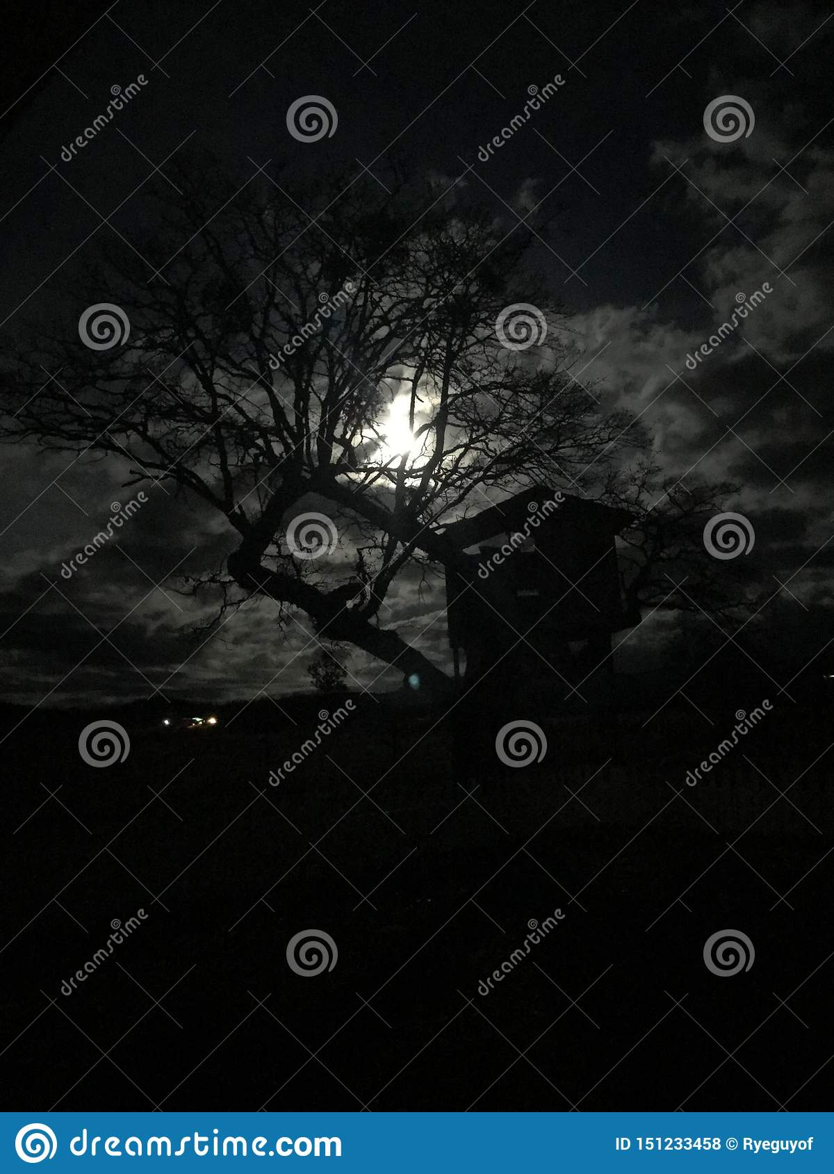 Light of the full moon peeks through barem leafless tree in autumn creating a spooky scence