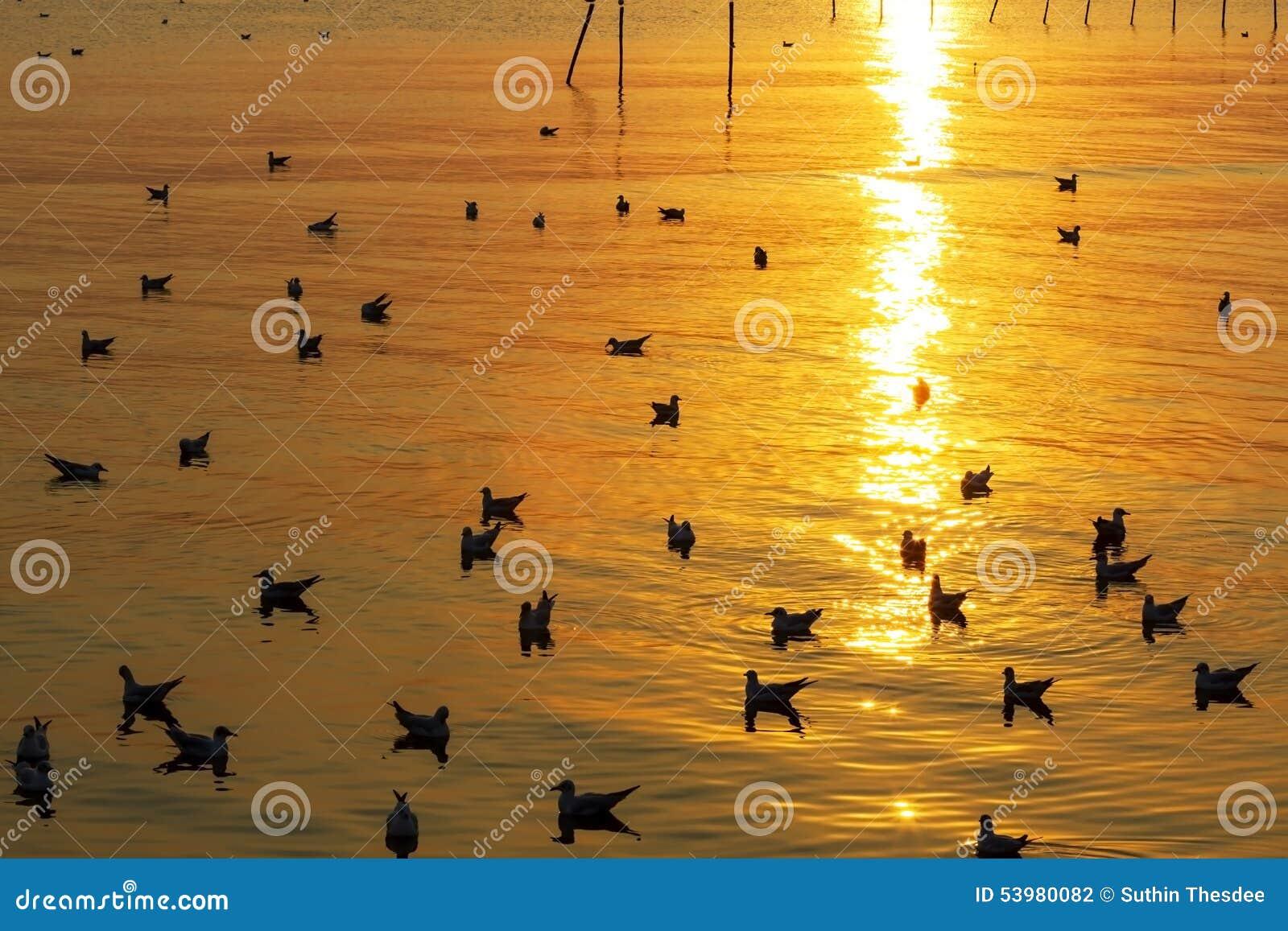 Light golden sunest seagull
