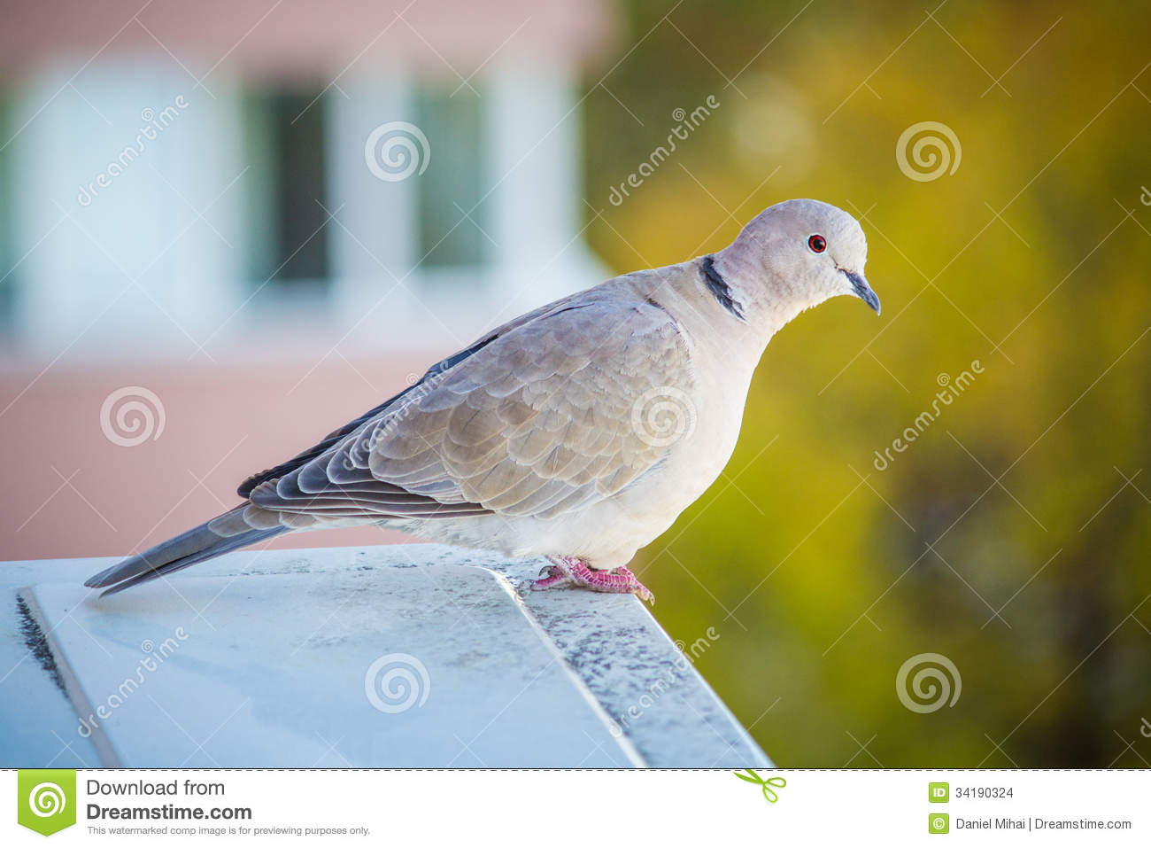 light gray pigeon colored background beautiful sitting air conditioning unit blurry 34190324