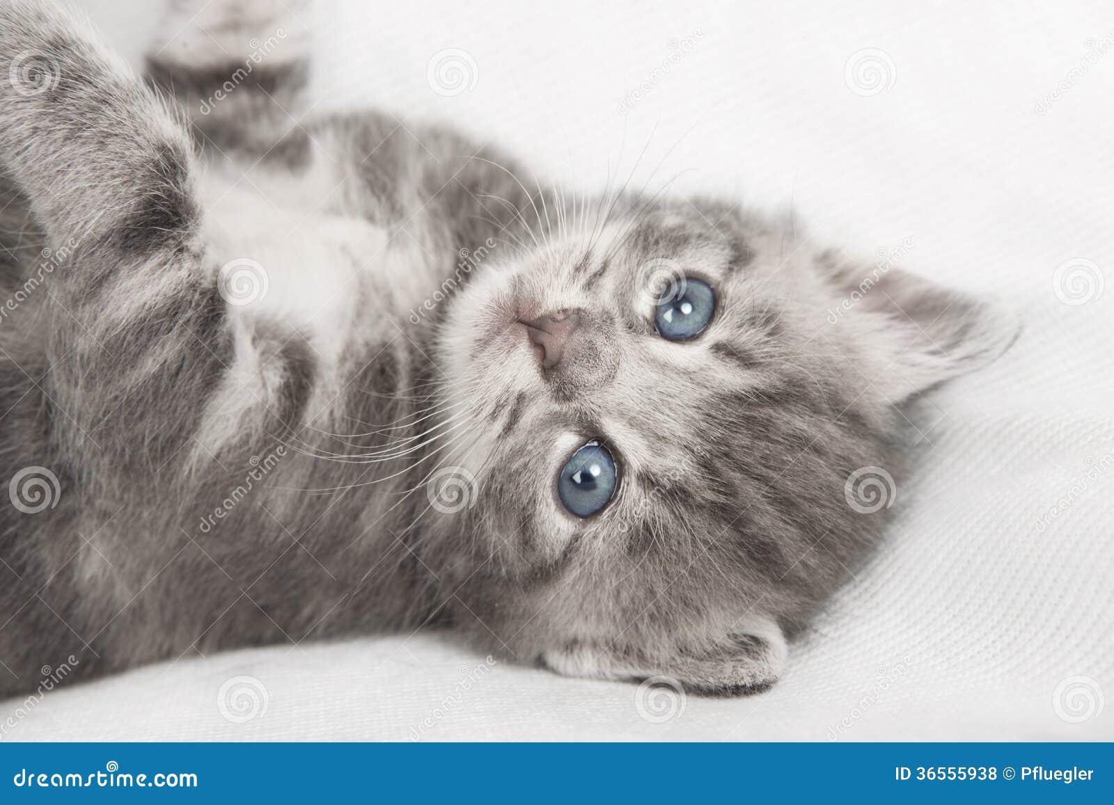cat litter box price in philippines