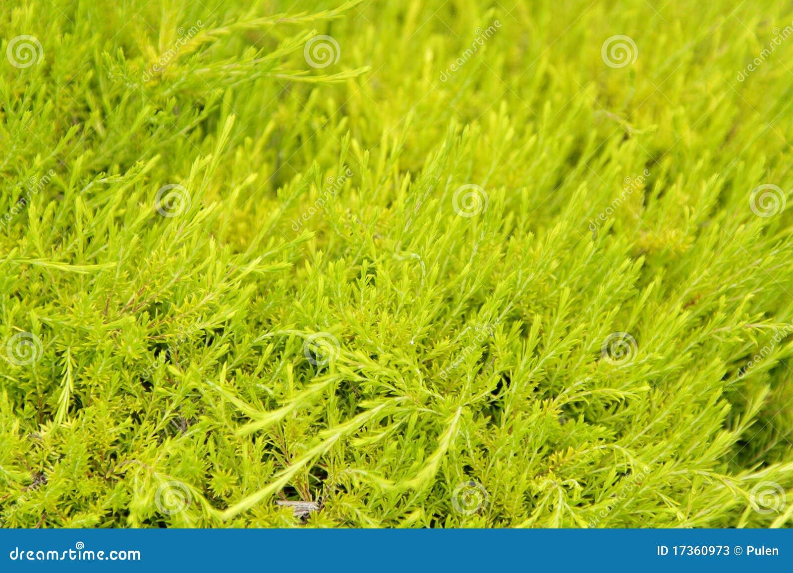Light green bush