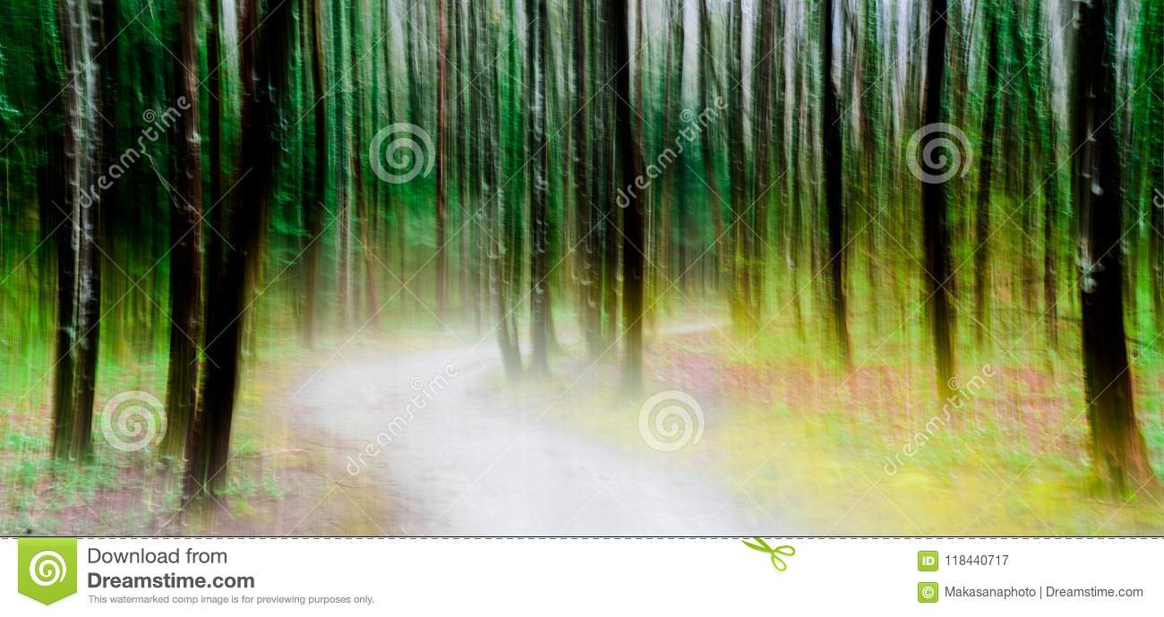 Light illuminated path through a lush green forest abstract panning style