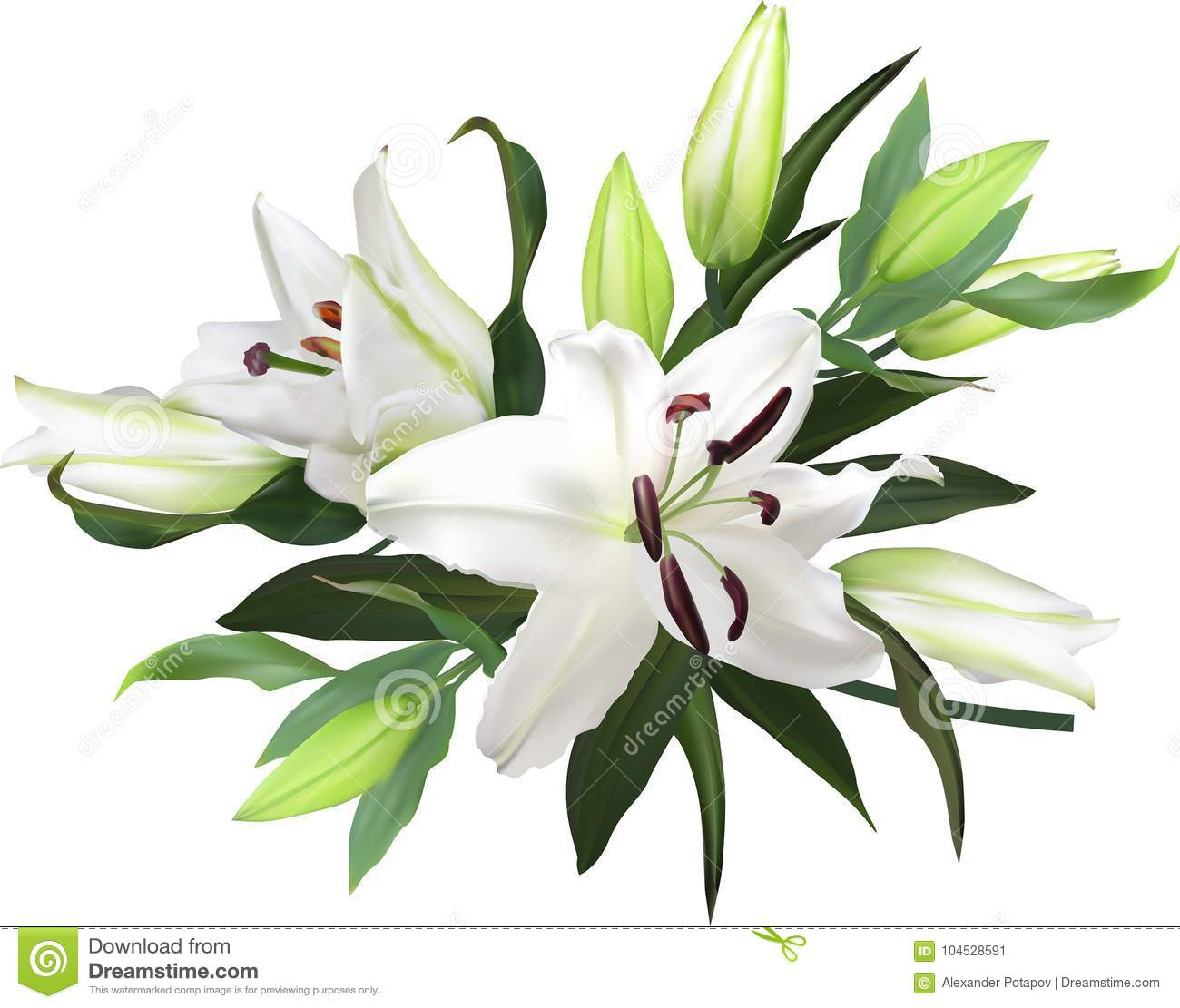 Light Lily Flowers Bunch On White Background Stock Vector