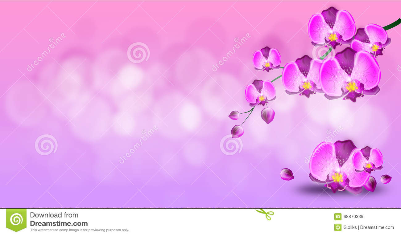 light pink background with purple orchid stock