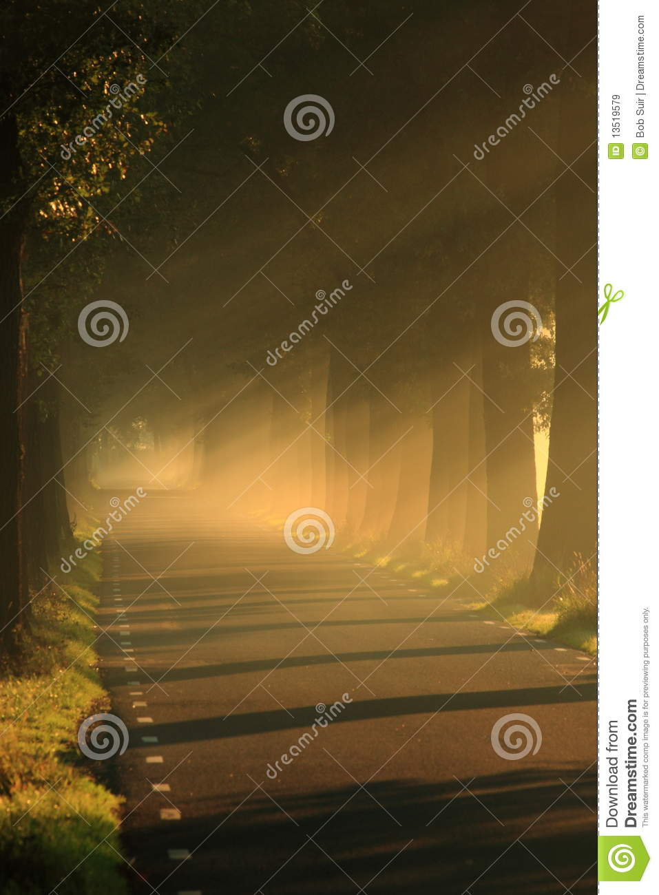 Light on the road with trees