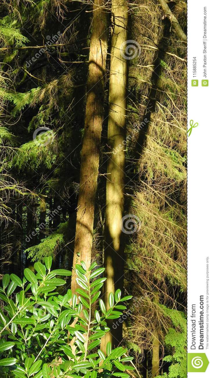 Light And Shade In Deep Woodland Stock Photo Image Of Light