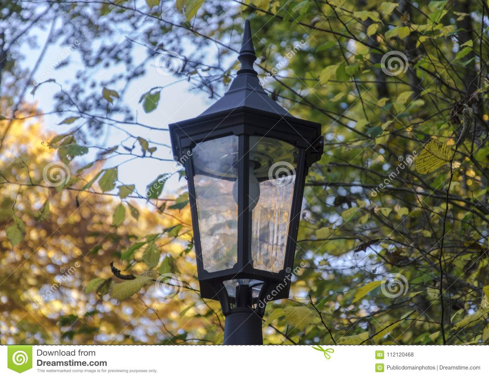 Lighting Bird Feeder Tree Branch Picture Image 112120468