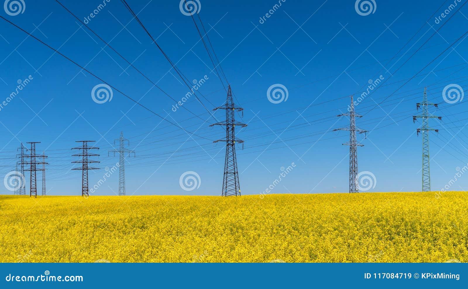 Ligne électrique dans le domaine de viol Napus de brassica Énergie électrique et renouvelable