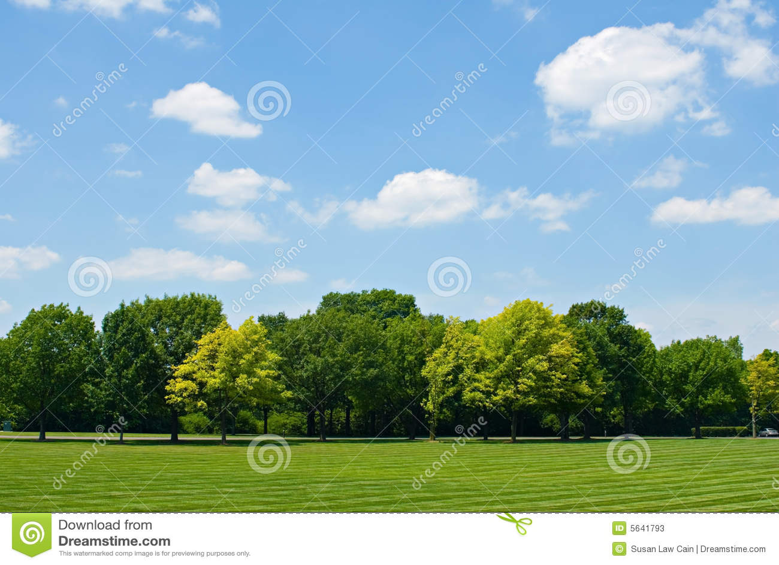 ligne d arbre avec le ciel - Arbre Ciel